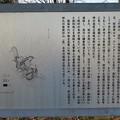 杉山城(嵐山町)本郭