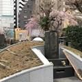 Photos: 善性寺(東日暮里)墓所
