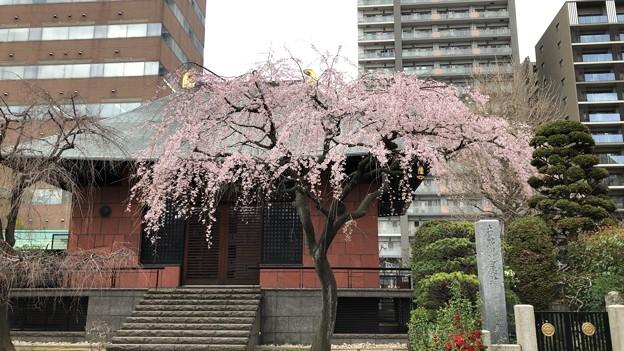 19.03.22.善性寺(東日暮里)本堂