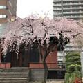 Photos: 19.03.22.善性寺(東日暮里)本堂