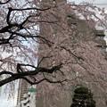 19.03.22.善性寺(東日暮里)