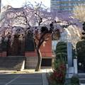 Photos: 19.03.24.善性寺(東日暮里)