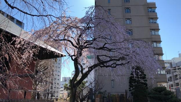 19.03.24.善性寺(東日暮里)