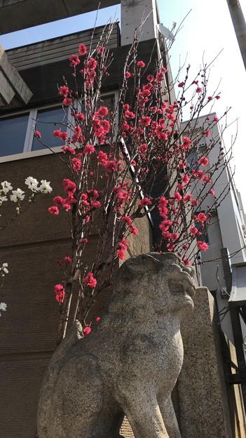19.03.25.小野照崎神社(下谷)紅梅