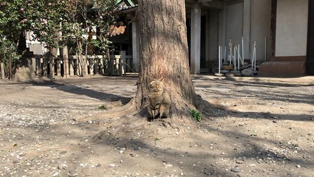 小野照崎神社(下谷)(=^・ω・^=)