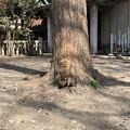 Photos: 小野照崎神社(下谷)(=^・ω・^=)