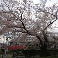 Photos: 19.04.08.立本寺山門前(上京区)