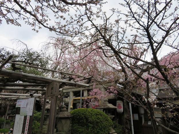19.04.08.雨宝院(上京区)