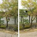 Photos: 大徳寺塔頭(京都市北区)芳春院