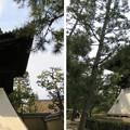 Photos: 大徳寺(京都市北区)鐘楼