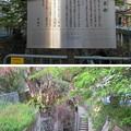 Photos: 戻橋・堀川(上京区)