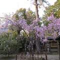 Photos: 19.04.08.応仁の乱勃発地(御靈神社(上御霊神社)。上京区)