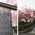 Photos: 妙顕寺/三好筑前屋敷考察地(上京区)