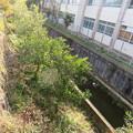 Photos: 淀古城(伏見区)天然水堀(南堀)