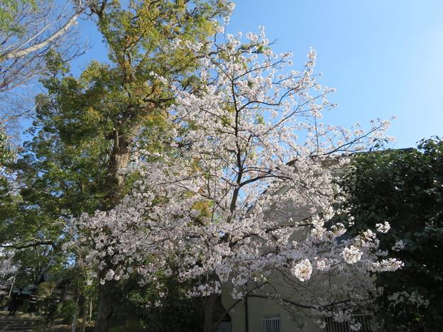 19.04.09.神足神社(勝竜寺城 神足屋敷。長岡京市)