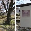 Photos: 19.04.09.勝竜寺城本丸(長岡京市)多聞櫓