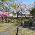 Photos: 19.04.09.勝竜寺城本丸(長岡京市)井戸跡