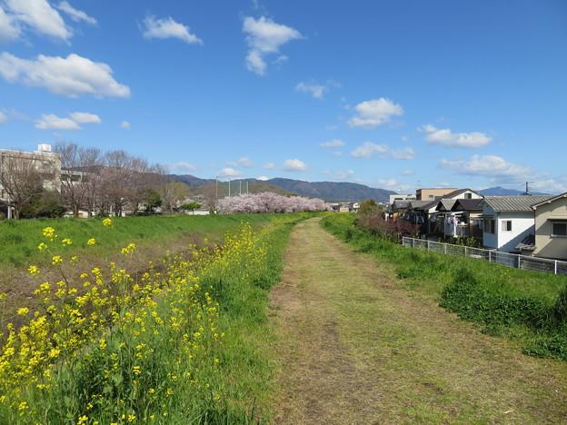 19.04.09.戌川河川敷(長岡京市)