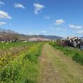 Photos: 19.04.09.戌川河川敷(長岡京市)