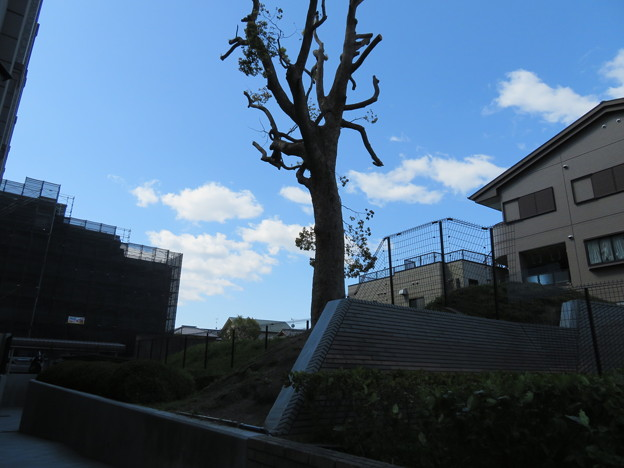 開田城(長岡京市)土塁