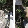 Photos: 長岡天満宮(長岡京市)神牛像・臥牛像(撫で牛)