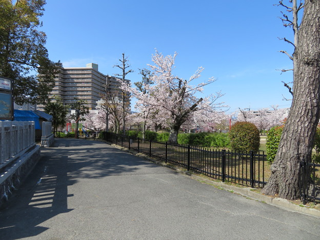 19.04.09.片埜神社(枚方市)