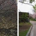 Photos: 大坂城(大阪府大阪市中央区)南仕切門・太鼓櫓跡