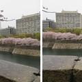 Photos: 19.04.10.大坂城(大阪府大阪市中央区)六番櫓より南外堀