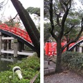 Photos: 住吉大社(大阪市住吉区)反橋
