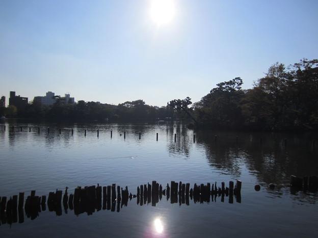 洗足池公園 (大田区南千束)