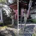 Photos: 泰叡山瀧泉寺 目黒不動尊(目黒区)前不動堂