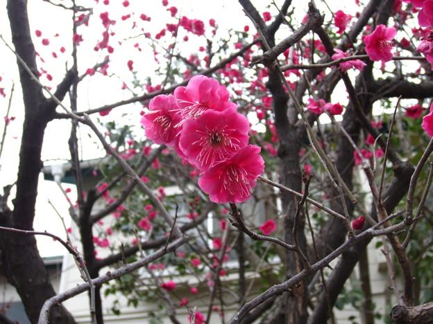 12.03.08.牛宝山明王院最勝寺 目黄不動尊(江戸川区)