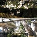 Photos: 題経寺 柴又帝釈天(葛飾区)御神水