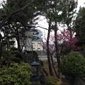 Photos: 14.02.04.延命寺(葛飾区青戸)