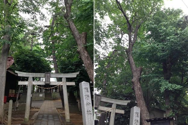 Photos: 堀ノ内熊野神社(杉並区)