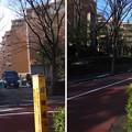 Photos: 堀田相模守屋敷(広尾4丁目)