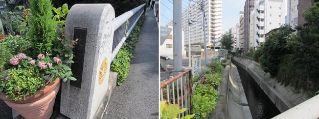 渋谷川 比丘橋(渋谷区東)