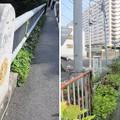 Photos: 渋谷川 比丘橋(渋谷区東)