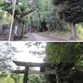 Photos: 渋谷氷川神社参道(渋谷区東)氷川の杜公園