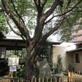 Photos: 金王八幡宮/渋谷城(渋谷区渋谷)