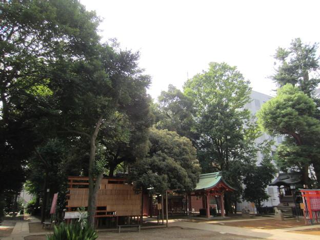 金王八幡宮/渋谷城本郭(渋谷区渋谷)