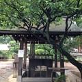 鳩森八幡神社(千駄ヶ谷八幡神社。渋谷区)手水舎