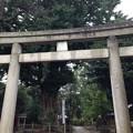 鳩森八幡神社(千駄ヶ谷八幡神社。渋谷区)御神木・北東鳥居