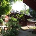 Photos: 尾崎神社(金沢市)中門(平唐門)・本殿