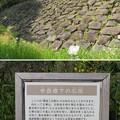Photos: 金沢城(石川県営 金沢城公園)本丸南西(申酉櫓)下石垣