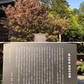 Photos: 尾山神社(金沢市)菊桜