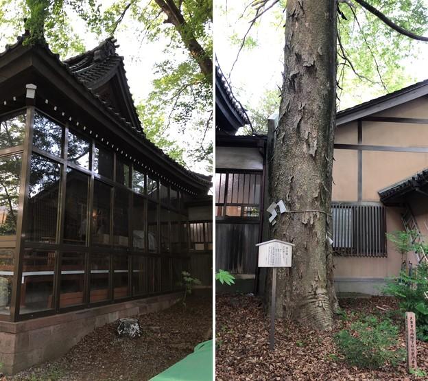 中村神社(金沢市)金沢城二の丸 舞楽殿 ・神木