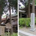 白山比咩神社(白山市)御神木(三本杉)