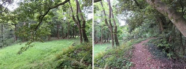 大聖寺城(石川県加賀市)武者走り・削平地