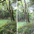 Photos: 大聖寺城(石川県加賀市)武者走り・削平地